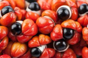 gurana extract Phen24 ingredients